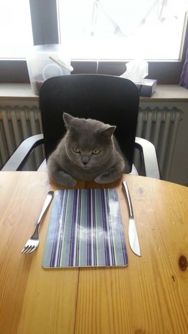 Mi gato esperando la comida