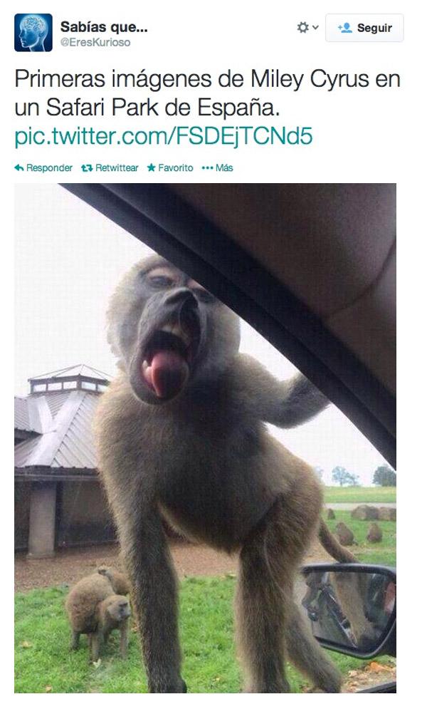 Miley Cyrus en un Safari Park