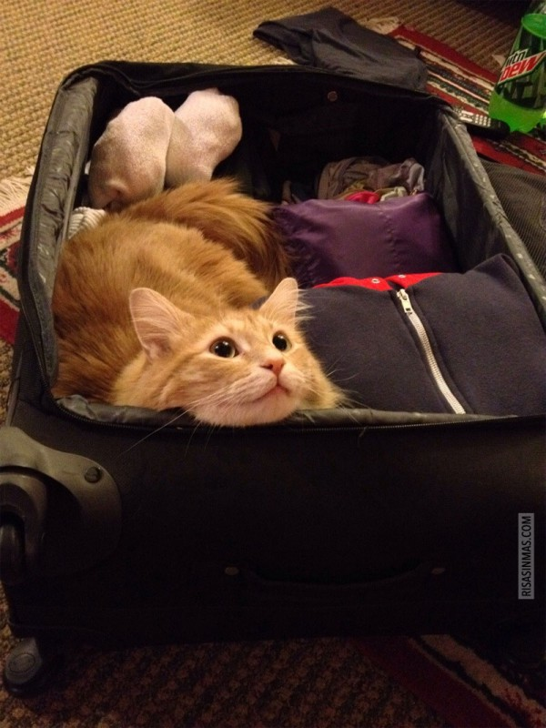 Preparando la maleta...