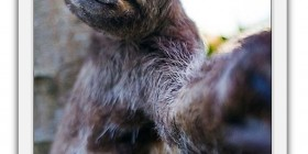 Selfie del perezoso
