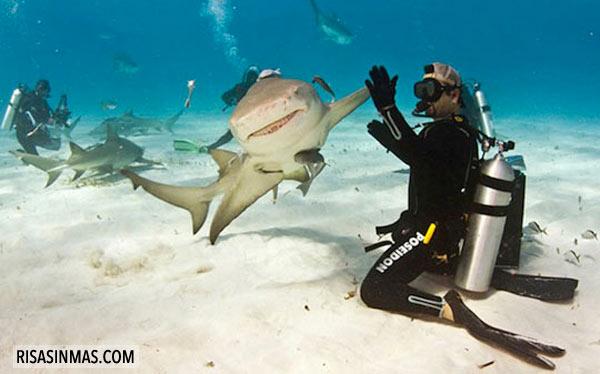 Tiburón chocándola