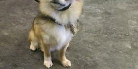 Un perrete muy chulo