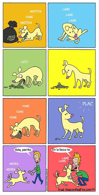 Un perro muy cariñoso