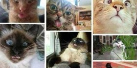 Si los gatos se hicieran selfies
