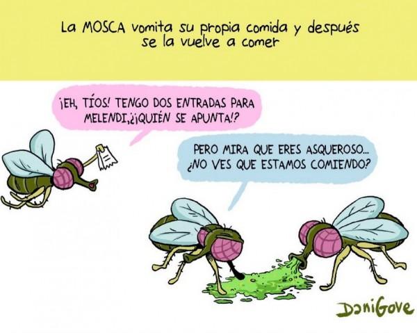 Las moscas vomitan su comida