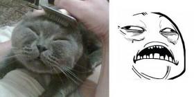 Parecidos razonables: gato y meme