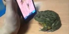 Una rana jugando con el móvil