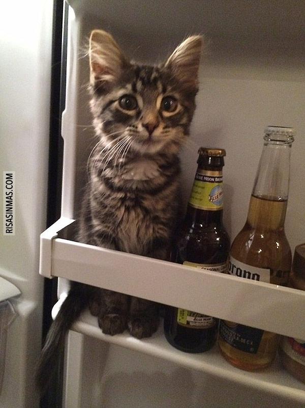 Abrir el frigorífico y...