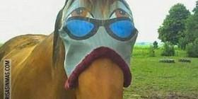 Caballo con gafas