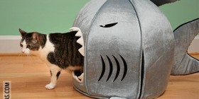 Cama para gatos tiburón