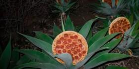 Descubren la planta de la pizza
