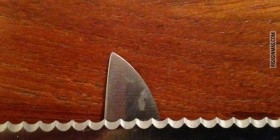 Hay un tiburón en mi cocina