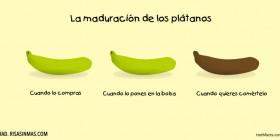 La maduración de los plátanos