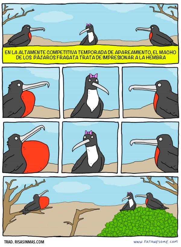 Los pájaros fragata machos