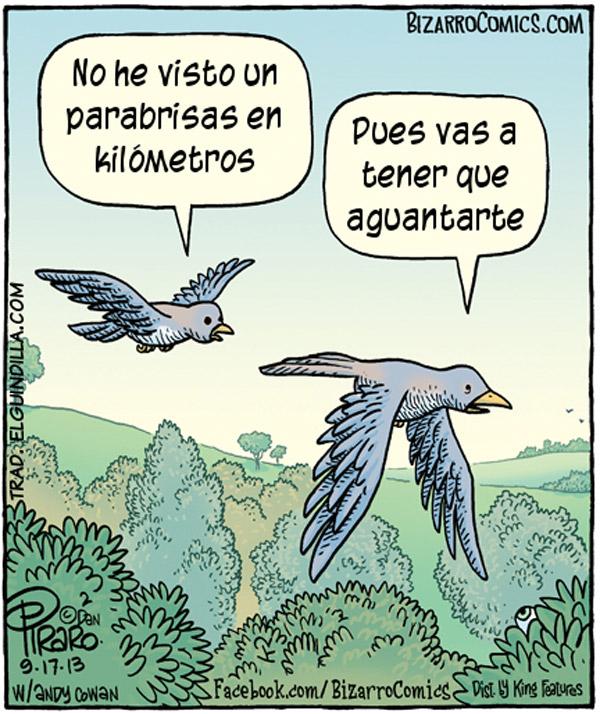 Los pájaros y los parabrisas