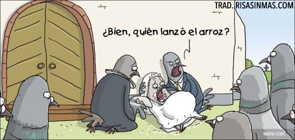 Palomas celebrando una boda