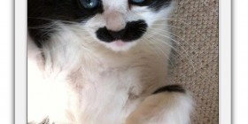 Selfie de mi gato Super Mario