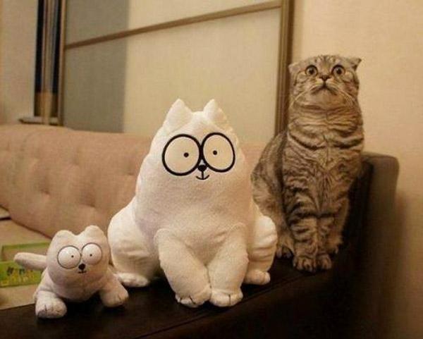 Encuentra el gato de verdad