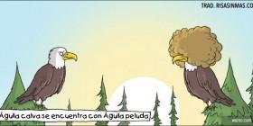 Encuentro de águilas