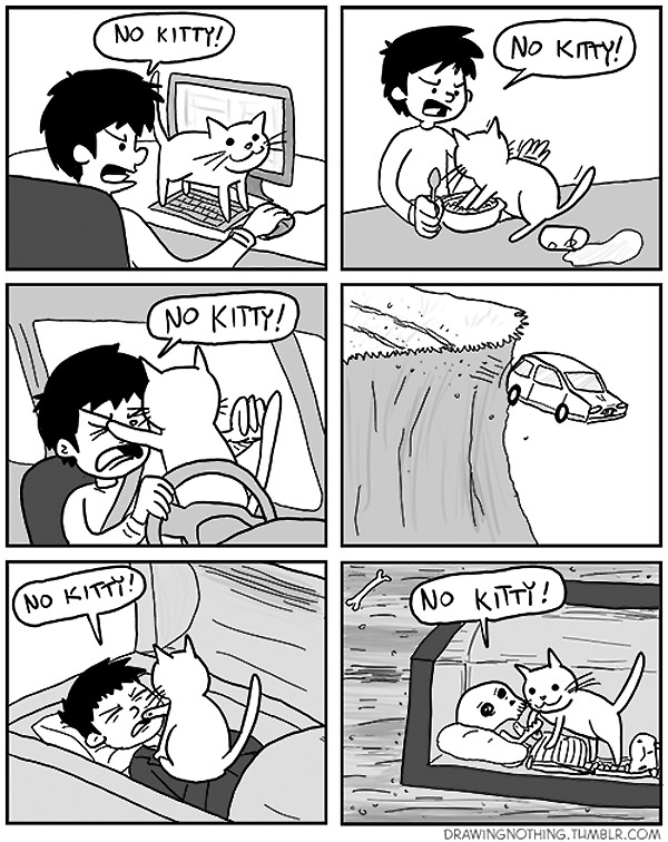 ¡No Kitty!