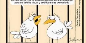 Pájaros indignados