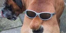 Perro con dos caras