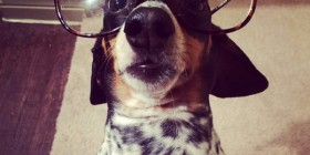Perro hipster haciéndose una selfie