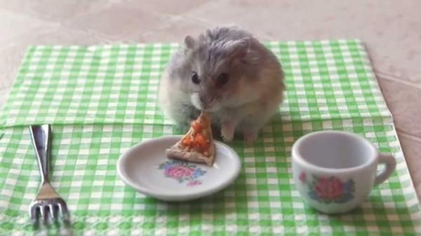 Hamster comiendo pizza