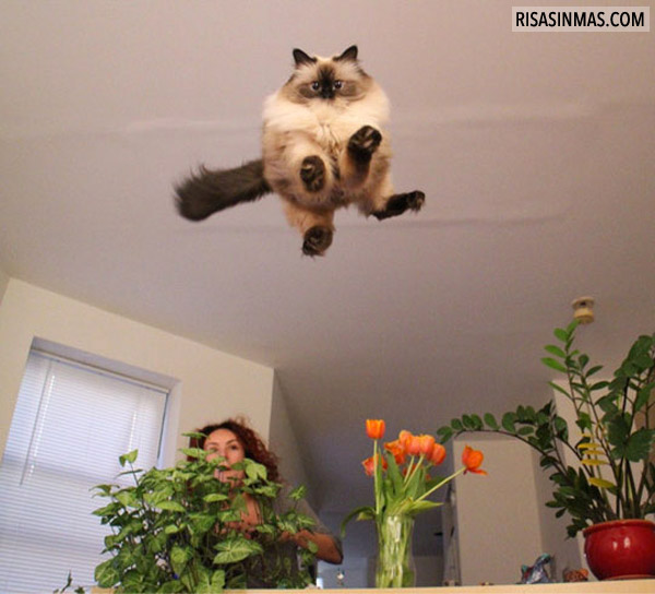 El gato globo