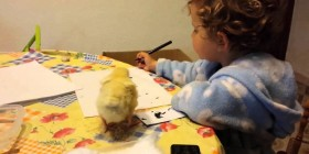 La niña y el pollito