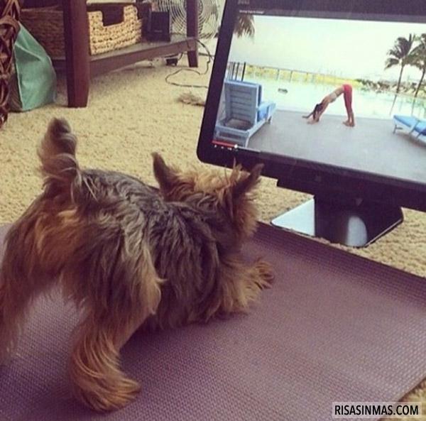 Perrito haciendo yoga