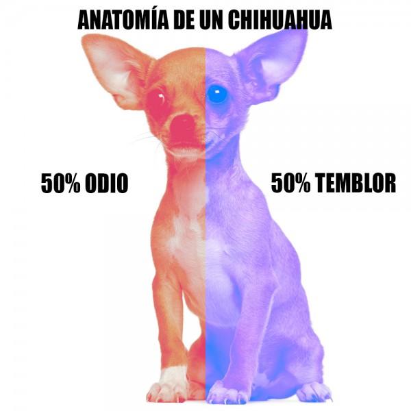 Anatomía de un chihuahua