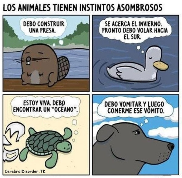 Instintos asombrosos de los animales