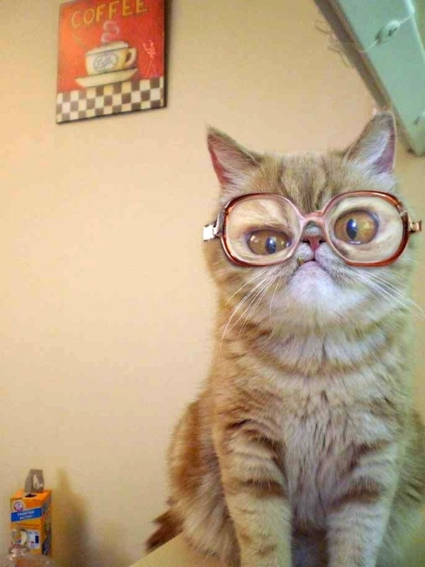 No le quedan bien las gafas
