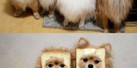 Perretes sandwiches