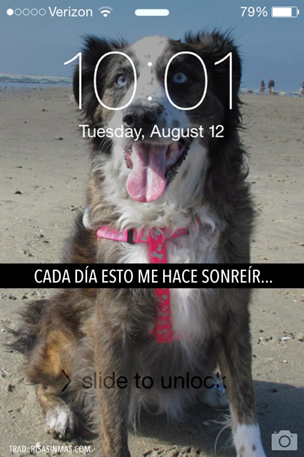 Fondo de móvil con perrete