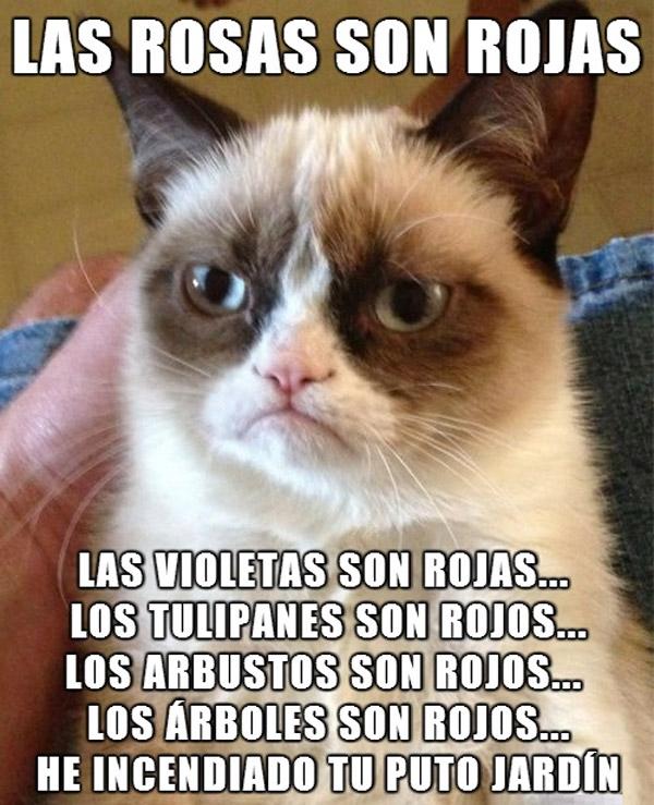 Grumpy cat: las rosas son rojas