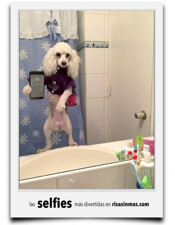 Los caniches se hacen selfies