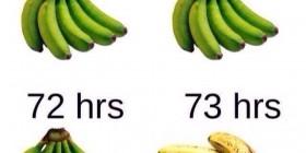 Así son los plátanos