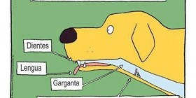 Lo que no sabías de la anatomía canina