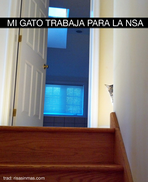 Mi gato trabaja para la NSA