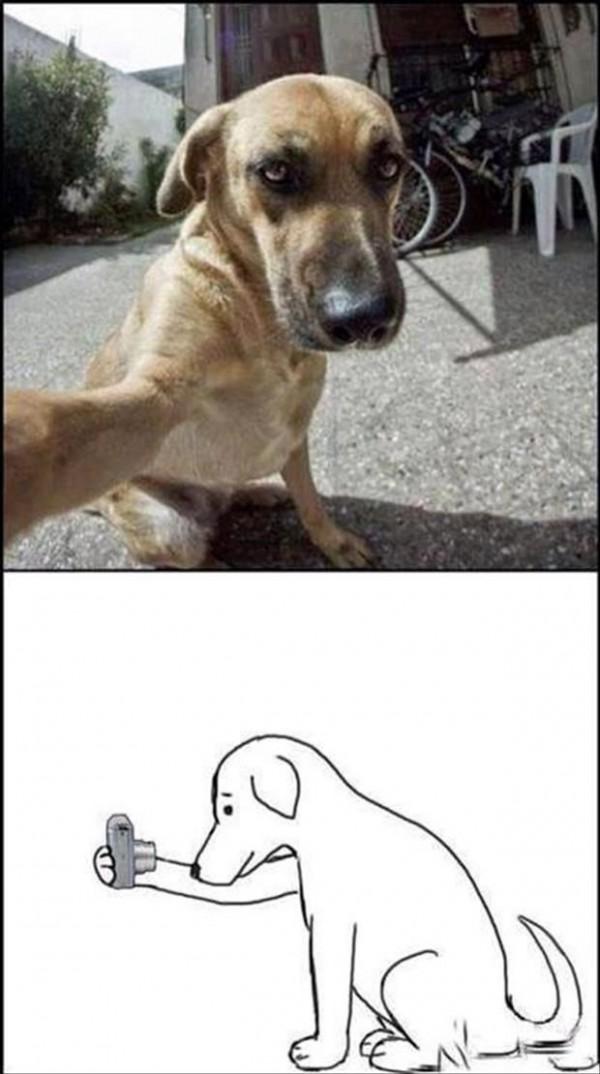 Perrete haciéndose selfie