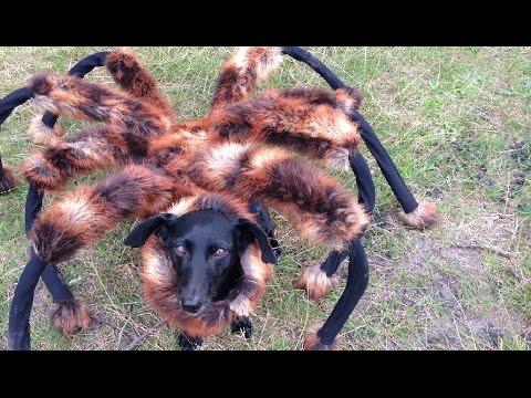 Perro araña gigante mutante