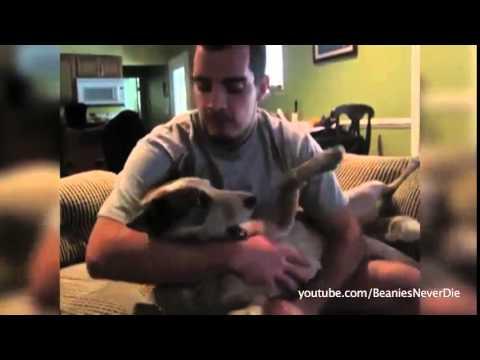 Perros y gatos poco cariñosos