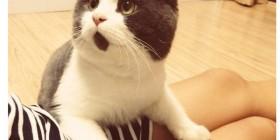 Banye, el gato que siempre está sorprendido