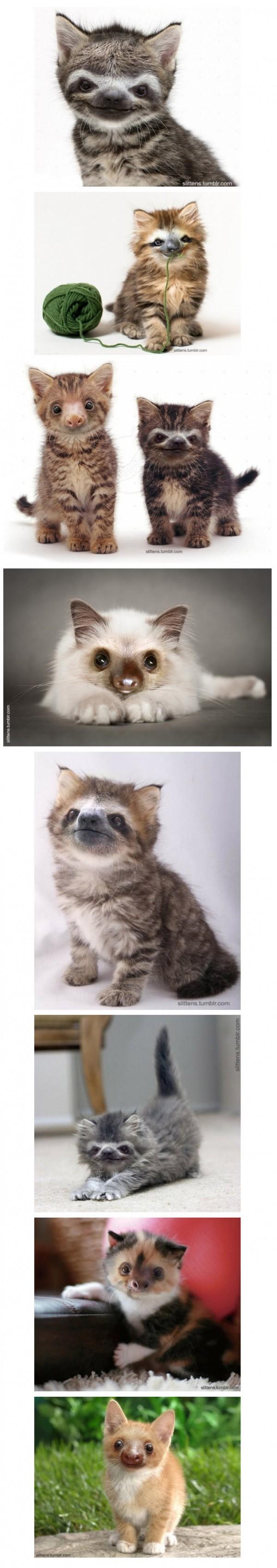 Gatitos con cara de perezosos