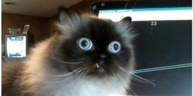 Gatos sorprendidos