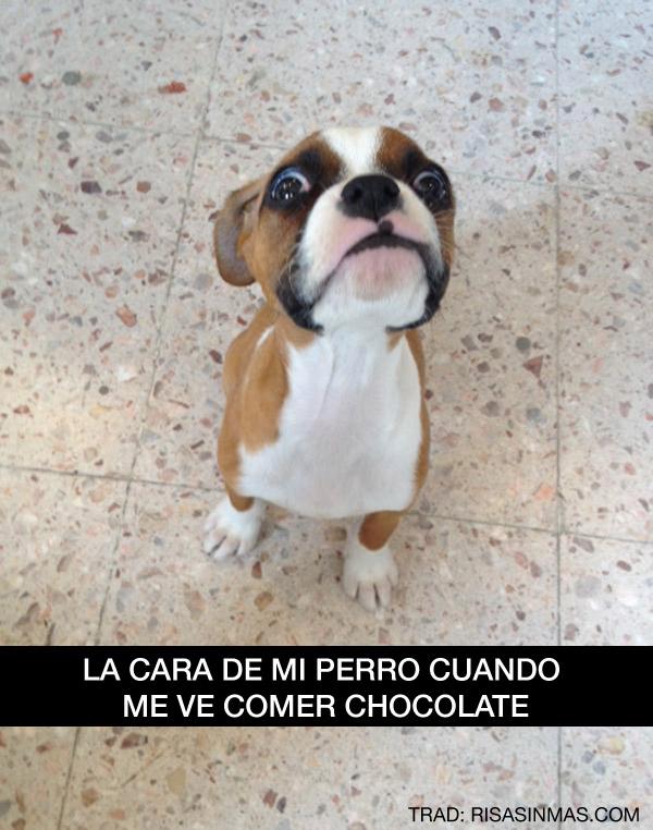 La cara de mi perro