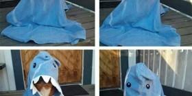 Perrete disfrazado de tiburón