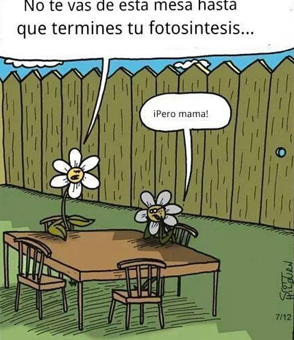 Termina tu fotosíntesis